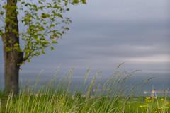 Wind (mmichalec) Tags: wind wiatr field tree drzewo spring wiosna cloud clouds cloudy chmury poland gdańsk