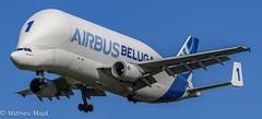 A300-600ST Beluga / Airbus Transport International (matdu20eme) Tags: aircraft airplane spotter spotting planespotter planespotting plane avporn avgeek toulouse roulouse airbustransportinternational beluga airbusbeluga airbus avion aviation