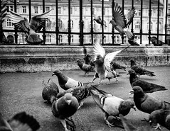 open air cage (mouzhik) Tags: 11000sf2iso100 m3 eosm3 canon efm22mmf2stm 22mm canonefm22mmf2stm prime pancake мужик moujik mouzhik muzhik zemzem mujik paris parís 파리 париж 巴黎 парыж פריז pariisi パリ párizs parîs باريس parys parizo парис paryż παρίσι پاریس parijs oiseau vogel bird pájaro птица ave pássaro ptak pigeon taube paloma pichón colomba гoлубь pomba gołąb noiretblanc nb schwarzweis monochrom blackandwhite bw monochrome blancoynegro blanconegro biancoenero bianconero