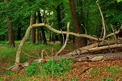 In the forest - Im Wald (b_kohnert) Tags: wood wald natur light licht landschaft landscape kreisgrosgerau hessen grün green germany forest farben colors bäume baum