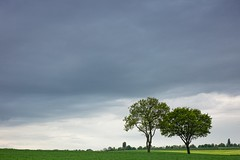 Two (2) (ulbespaans) Tags: less lessismore tree trees treescape landscape landscapephotography minimal minimalism minimalistic minimalisticart sky agriculture