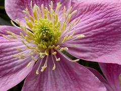 flower (Jackal1) Tags: flower macro nature pink yellow scotland