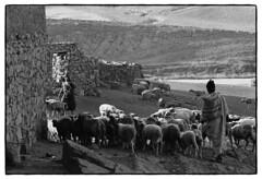 82207_13 High Atlas, Morocco, 1982 (Wolfgang_Kraus) Tags: morocco maroc marokko highatlas berbers imazighen village landscape sheep ethnography analog film pentax mx smcpentaxm200mmf4 ilford hp5 id11 monochrome schneiderkreuznach adapted 11 xenon zirconia k1 dslrscanning linescan industriallens piplkan