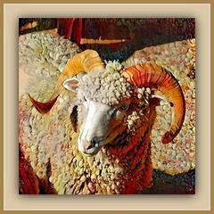 In order to be an immaculate member of a flock of sheep, one must above all be a sheep oneself. (Albert Einstein) (boeckli) Tags: 014256 rx100m6 sheep schaf animal animals tier tiere textures texturen texture textur rahmen frame photoborder ddg deepdreamgenerator outdoor newsouthwales tobruksheepstation maroota sydney australia wool fur