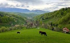 Șimon - Bran - Brașov - România (morome7e) Tags: travel mountain nature europe forrest visit transylvania brasov carpati magura zarnesti iphone apple