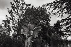 Broken angel (thriddle) Tags: cambridge xtransformer monochrome