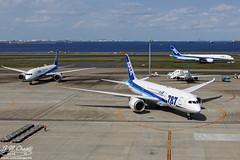 All Nippon Airways [NH][ANA] / JA817A / 787-8 / RJTT (starger64) Tags: canoneos1dmrakiv ef24704isl rjtt hnd hanedaairport 羽田機場 東京国際空港 allnipponairways ana 全日空 全日本空輸 ja817a 7878 boeing7878 boeing 787 788 aviation aircraft airplane arlines