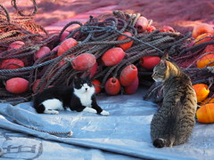 cats in the fishing port (murozo) Tags: fishing gear cat kisakata port nikaho japan 象潟漁港 漁港 漁具 猫 港猫 にかほ 秋田 日本