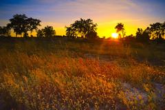 Sunset - Fajarda - Coruche (Capturedbyhunter) Tags: fernando caçador marques fajarda coruche ribatejo santarém portugal pentax k1 smc m zoom 2435 f35 landscape paisagem sunset pôr do sol manual focus focagem foco pentaxart