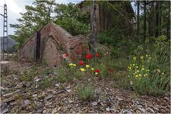 La estación de las flores (Fernando Forniés Gracia) Tags: españa aragón zaragoza hocesdeljalón estación estaciónabandonada flores paisaje landscape naturaleza