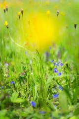 (kuuan) Tags: mf manualfocus supertakumarf1450mm 8element f14 50mm takumar flower garden supertakumar firstversion wiese blume meadow austria fruehlingswiese blumenwiese dof bokeh macro closefocusing helicoidadapter