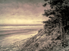 Along the Way (Colormaniac too - Many thanks for your visits!) Tags: travel washingtoncoast washingtonstate pacificocean oceanbeach beach driftwood nature monochrome landscape digitalpainting pacificnorthwest topazstudio netartll hss