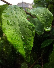Rain Rain Go Away (PEEJ0E) Tags: spring psexpress filter leaves leaf raindrops