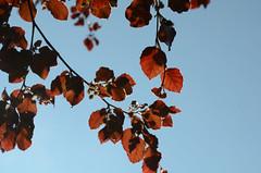134 Leaves (Conanetta) Tags: