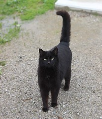 """Blackie (barnie) • <a style=""""font-size:0.8em;"""" href=""""http://www.flickr.com/photos/72892197@N03/47929570896/"""" target=""""_blank"""">View on Flickr</a>"""