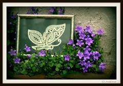 eingerahmt / Alle Rechte vorbehalten © AndiDroid ;-)   Smile On Saturday!... #Butterflies (AndiDroid ;-)) Tags: andidroid foto photo photography photographie natur nature blumen flowers klöppelarbeit lacework schmetterling gedankenwelt worldoftought spring springtime smileonsaturday butterflies