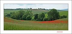 Cercando primavera, un po' Jambo e un po' Gogh. (1) (Jambo Jambo) Tags: panorama landscape campagna countryside valdorcia siena toscana tuscany italia italy watercolor watercolorpainting papaveri poppies sonydscrx10m4 jambojambo