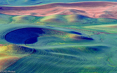 untitled-6.jpg (LHDPhotos) Tags: landscape palouse wa farmland greenwheatfield steptoebutte patterns agriculture