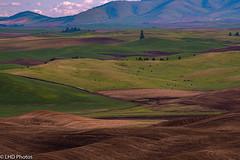Steptoe Butte WA (LHDPhotos) Tags: fields hills steptoe palouse wa agriculture landscape