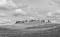 Palouse Field (LHDPhotos) Tags: landscape farm fields wheat rural palouse wa blackandwhite