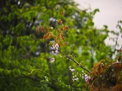 Evening Nature Bokeh   25. Mai 2019   Tarbek - Schleswig-Holstein - Deutschland (torstenbehrens) Tags: evening nature bokeh   25 mai 2019 tarbek schleswigholstein deutschland olympus penf 7xef50149mm f28