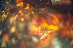 Crazy bokeh (Ro Cafe) Tags: lensbaby nature sonya7iii spring twist60 macrofilters tree bokeh colorful flora outdoors