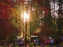 Parking lots, 2. (thnewblack) Tags: huawei p30pro leicaoptics parkinglot outdoors britishcolumbia beautiful morning vsco nature trees smartphone cameraphone