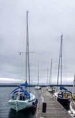 And off to Rathlin we did go........... (apcmitch) Tags: sea sealmorning ireland rathlin ni riverbann iphonephotos sailing