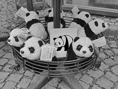 #goodpandacontest flickr panda meeting the plushy Pandas at the shop of the Zoo Tiergarten Schönbrunn (hedbavny) Tags: goodpandacontest flickr contest zoo tiergarten schönbrunn shop cuddlytoy stuffedanimal kuscheltier stofftier plüschtier plushie softtoy fluffy fluffytoy wien vienna austria österreich hedbavny ingridhedbavny goodpandaphotocontest photocontest photo bw blackandwhite schwarzweis wildrepublic toy spielzeug