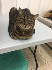 Dominic - 13 year old neutered male