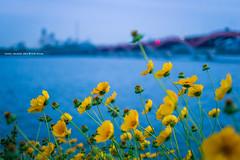 Han river side (gwnam.2008) Tags: hanriver hanriverpark river riverside riversidepark seoul twilight sunset blue bluehour horizontal