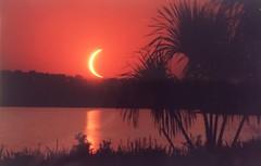 Touchdown  .  .  . (ericrstoner) Tags: solareclipse totalsolareclipse sunset brasília lagonorte distritofederal nikkormatft lagoparanoá palmeiraburiti mauritiaflexuosa morichepalm palm palmeira lake lago kodacolor100film lentartelephotolens