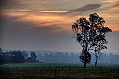 Cobbitty sunset. (Ian Ramsay Photographics) Tags: cobbitty newsouthwales australia backdrop smoke