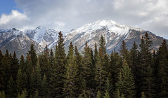 Canmore, Alberta, Canada (todaniell) Tags: canada alberta albertacanada canmore canon odaniell canon6d snow mountains canadianrockies pinetrees landscape wideangle rockies