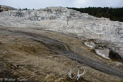 Cleopatra Terrace (?) Mammoth Hot Springs, Yellowstone (pacgrove) Tags: landscape