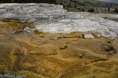 Cleopatra Terrace (?) Mammoth Hot Springs, Yellowstone (pacgrove) Tags: landscape geothermal