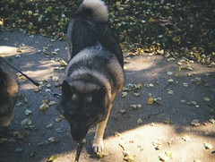 Grainy dog (Matthew Paul Argall) Tags: kodakpocketinstamatic10 fixedfocus 110 110film subminiaturefilm lomographyfilm 200isofilm