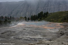 New Palette Spring, Mammoth Hot Springs, Yellowstone (pacgrove) Tags: landscape geothermal