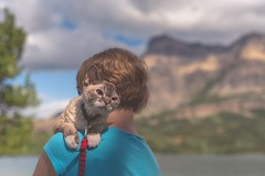Gizmo's big day out (Tracey Rennie) Tags: gizmo cat waterton alberta daytrip flickrcation mountains june littledoglaughedstories hss
