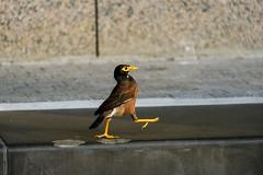 Pacing bird (Lux Aeterna - Eternal Light) Tags: