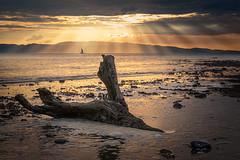 Firth of Thames (Jos Buurmans) Tags: coastallandscape coastline coromandelpeninsula evening firthofthames goldenhour landscape nature newzealand northisland seascape sunrays sunshine thamescoromandel waikato nz