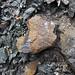Calciocarbonatite dike (Firesand River Carbonatite Complex, Mesoproterozoic, 1.078 Ga; Wawa Lake East roadcut, northeast of Wawa, Ontario, Canada) 10