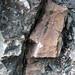 Calciocarbonatite dike (Firesand River Carbonatite Complex, Mesoproterozoic, 1.078 Ga; Wawa Lake East roadcut, northeast of Wawa, Ontario, Canada) 8