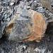 Calciocarbonatite dikes (Firesand River Carbonatite Complex, Mesoproterozoic, 1.078 Ga; Wawa Lake East roadcut, northeast of Wawa, Ontario, Canada) 9