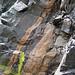 Calciocarbonatite dikes (Firesand River Carbonatite Complex, Mesoproterozoic, 1.078 Ga; Wawa Lake East roadcut, northeast of Wawa, Ontario, Canada) 12