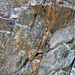 Calciocarbonatite dikes (Firesand River Carbonatite Complex, Mesoproterozoic, 1.078 Ga; Wawa Lake East roadcut, northeast of Wawa, Ontario, Canada) 18