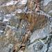 Calciocarbonatite dikes (Firesand River Carbonatite Complex, Mesoproterozoic, 1.078 Ga; Wawa Lake East roadcut, northeast of Wawa, Ontario, Canada) 19