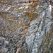 Calciocarbonatite dikes (Firesand River Carbonatite Complex, Mesoproterozoic, 1.078 Ga; Wawa Lake East roadcut, northeast of Wawa, Ontario, Canada) 17