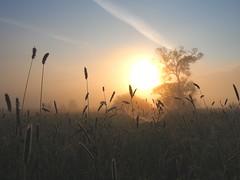 NICE SUNDAYSUNRISE P5260018 (hlh 1960) Tags: sun sunrise sonne sonnenaufgang sol soleil morgen morning farben gras tree baum himmel sky home heimat summer sommer warm germany nature natur landschaft landscape tautropfen spinnennetz spiderweb