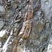 Calciocarbonatite dikes (Firesand River Carbonatite Complex, Mesoproterozoic, 1.078 Ga; Wawa Lake East roadcut, northeast of Wawa, Ontario, Canada) 21